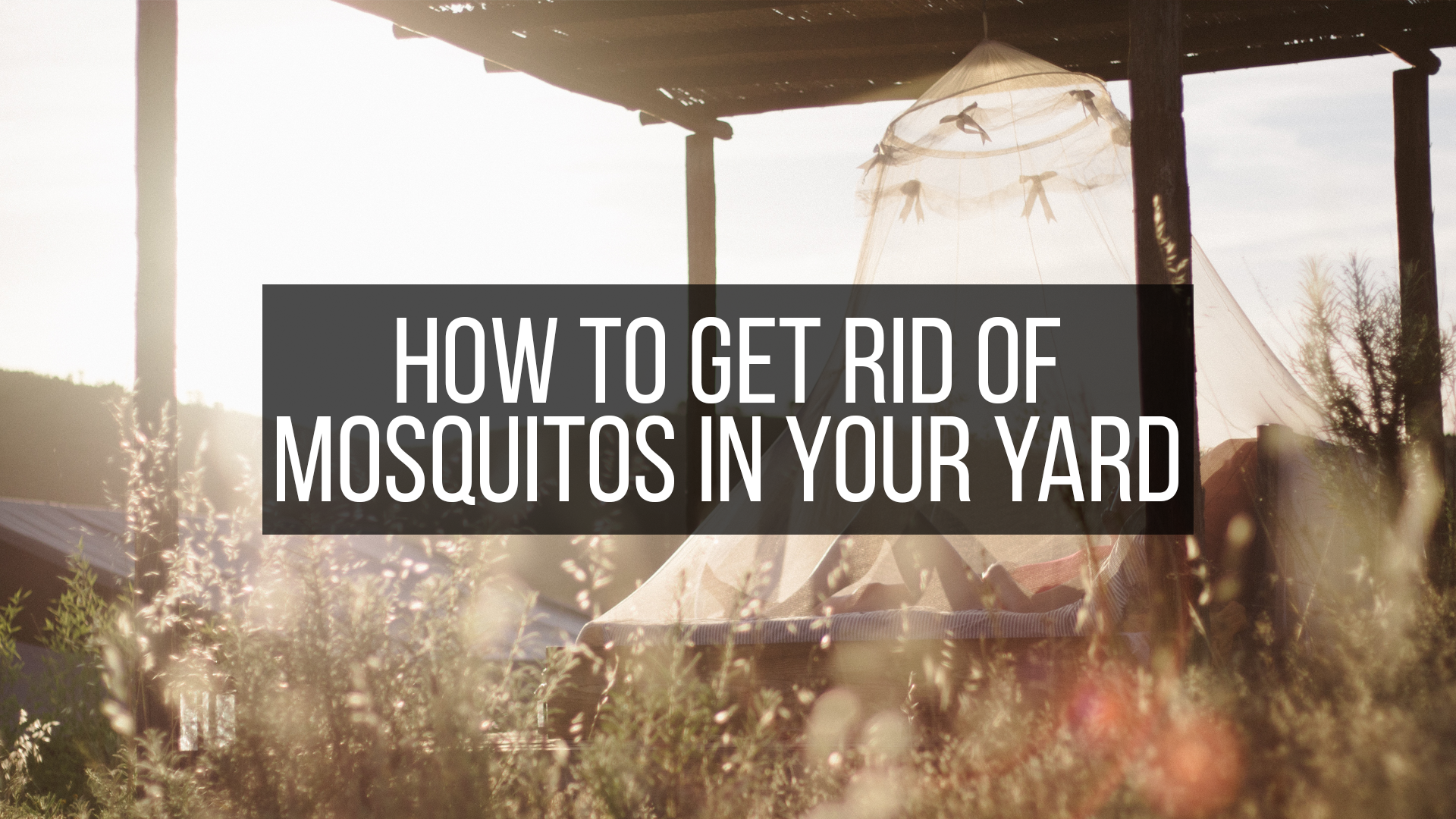 how to get rid of mosquitos featured image