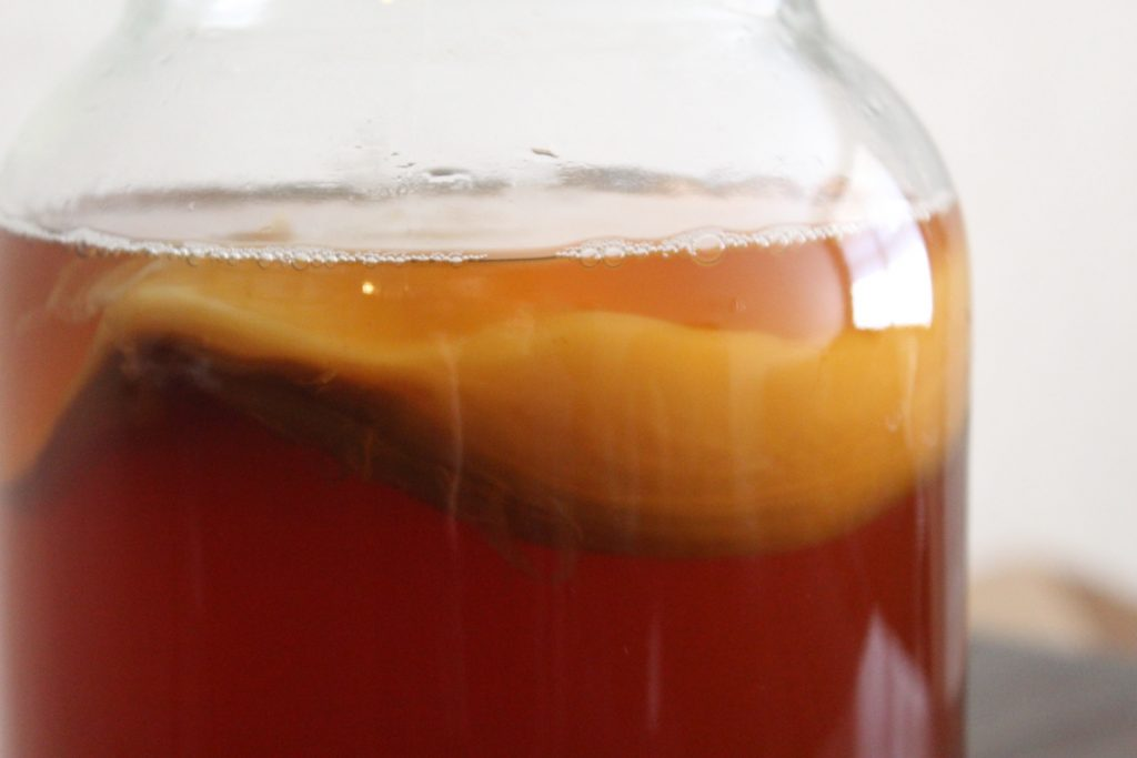 closeup of kombucha SCOBY that was bought online
